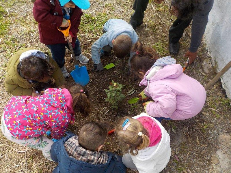 Τα νήπια της Καλλονής φυτεύουν μια ΧΑΡΟΥΠΙΑ στο σχολικό κήπο του νηπιαγωγείου Καλλονής